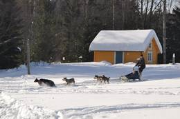 Hundekjøring på Sæteren Gård - Foto: Ane Marte Gussiås