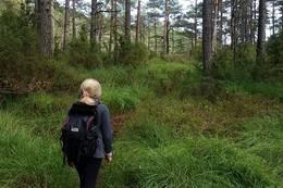 Turen går på fin skogssti den siste biten. - Foto: Lars Jøran Sundsdal
