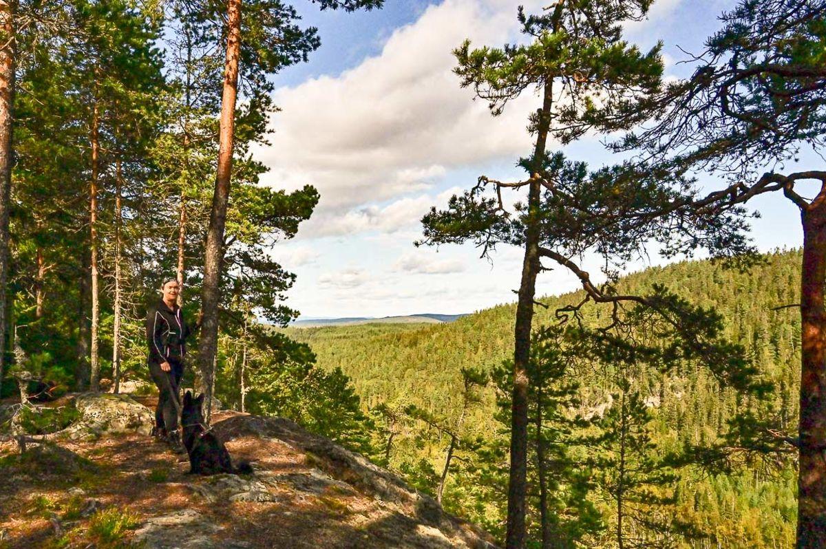 Utsikt til Nordre Ringkollen fra Hærfangen