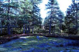 Knausskog rundt Verkensmåsan -  Foto: Kim Abel