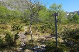 Der stien deler seg, ved skilt til toppen av Håsteinen ( T ), tek du til høgre på god sti gjennom fin bjørkeskog - Foto: Arnfrid Bergheim