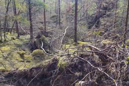 Rasert skog på venstresiden av dalen. - Foto: Kjell Fredriksen