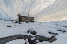 Gullhorgabu - Foto: Espen Haagensen