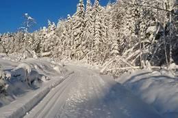 Skispor en vakker vintersoldag - Foto: