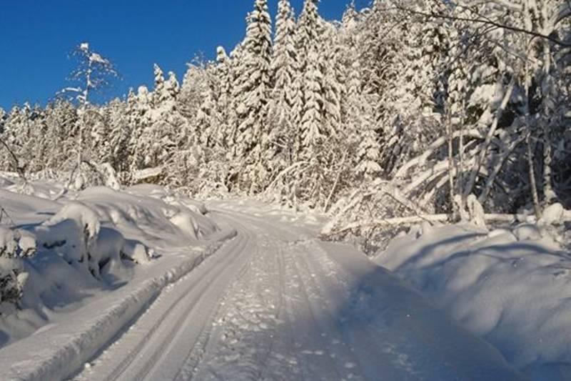 Skispor en vakker vintersoldag