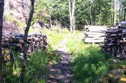 Stien går delvis i skog. -  Foto: Gunnar Buvik