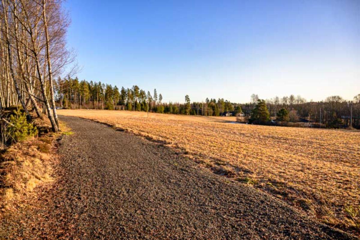 Skogsvei langs jordet