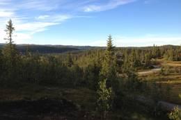 Utsikt sørover mot Surtind -  Foto: Anders Sten Nessem
