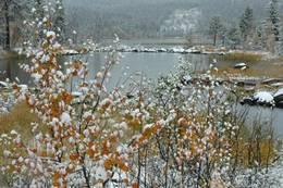 Buvatn ved Grunntjernsbekken - Foto: Torbjørn Martinsen