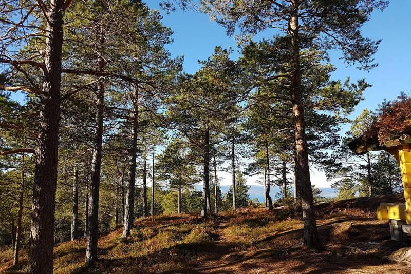 Utsikt fra Rapphytta nordover. Trondheimsfjorden og Leksvika synes.
