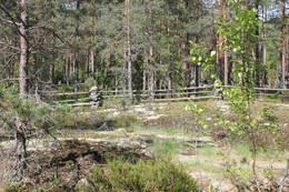 Vi passerer en bjønnegard, som er den tradisjonelle måten å bygge gjerde på der hvor det er fjell i bakken.  - Foto: Hilde Roland