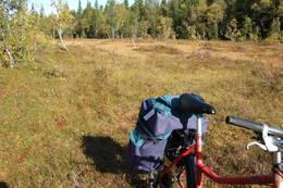 Sykkel i terrenget - Foto: Visit Innherred AS
