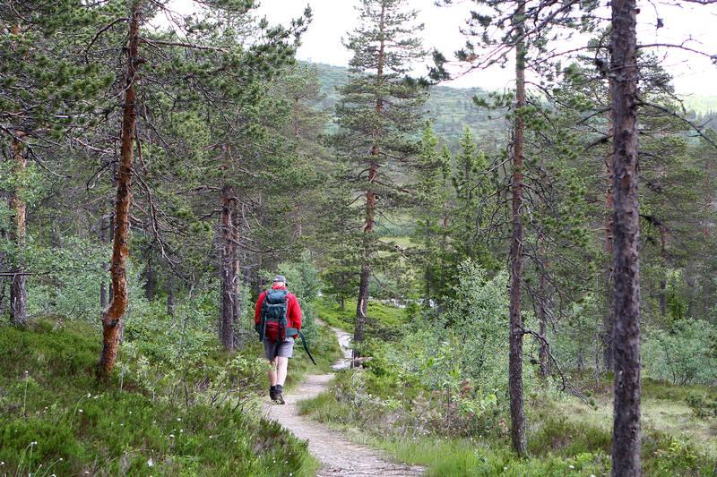 Turen starter i fjellskog