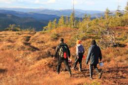 Bilde tatt fra stien.  - Foto: Kathrine Kragøe Skjelvan
