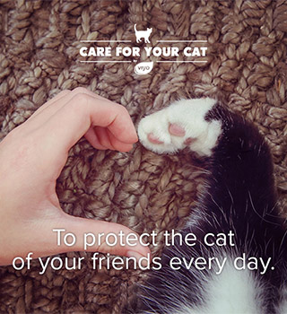 To protect the cat of your friends every day