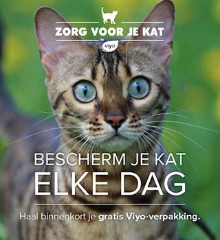 Zo bescherm je de kat van je vrienden elke dag