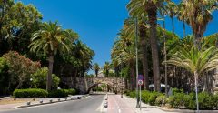 Kos Island Palm Avenue