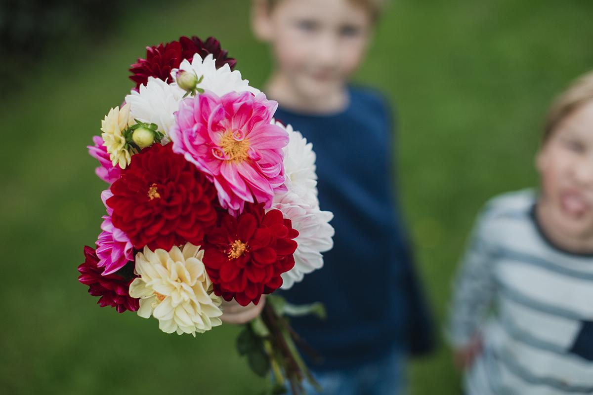 Tre generationer av dahlior; en kärleksförklaring