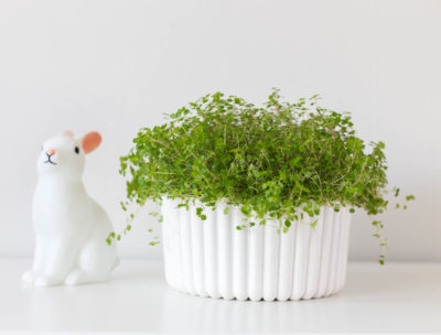 DIY Plaster planter | by Dnilva