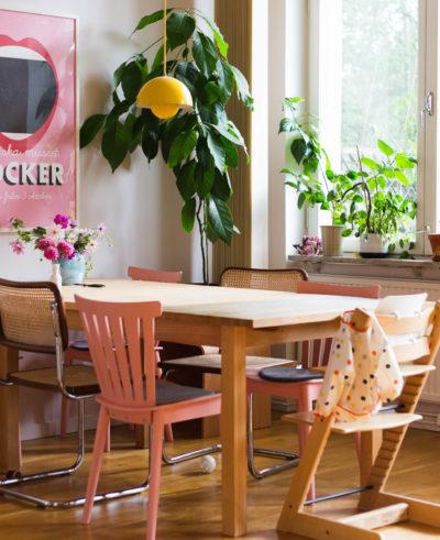 Avokadoträdet flyttar in i köket
