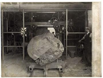 Tree band mill machine