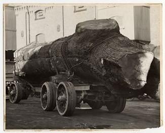 Tree Haul