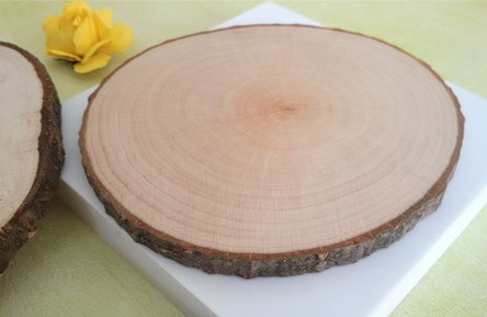 Birch Tree Rustic Log Slices / Discs