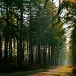 Thumbsq_bp_woodland