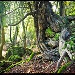 Thumbsq_tree_eye1
