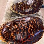 Thumbsq_original_turtle_shells