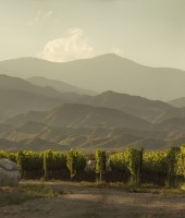 Image of Andean Vineyards