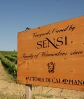 Image of Sensi