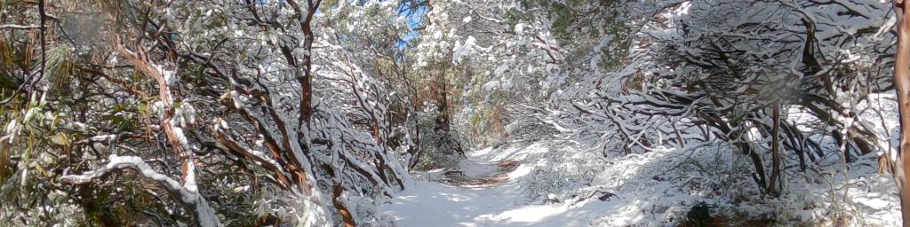 ❄️❄️❄️  California Winter Wonderland ❄️❄️❄️