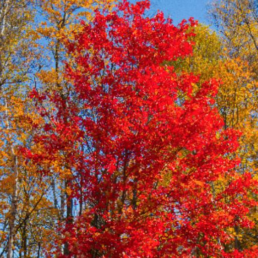 Fall rides
