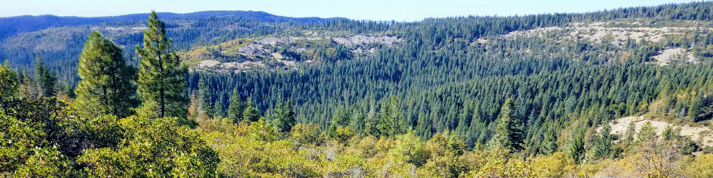 Forest City California