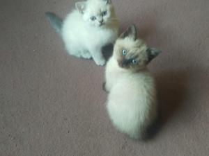 Cats and Kittens for sale in Winchester   Kitten Ads
