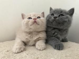 Cats and Kittens for sale | Kitten Ads
