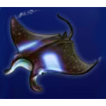 play Dolphin Gold for real money