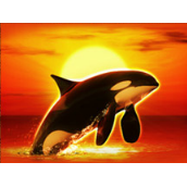 play Orca for real money