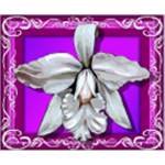spil White Orchid gratis