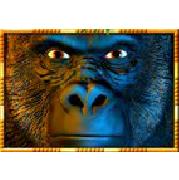 Gewinne Echtgeld am Gorilla Chief 2 Automaten