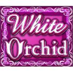 vind rigtige penge på White Orchid