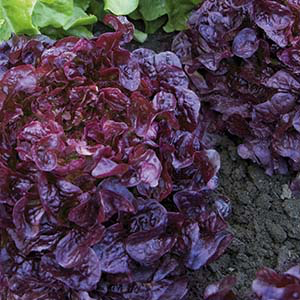 sallad_plock_red_salad_bowl.png