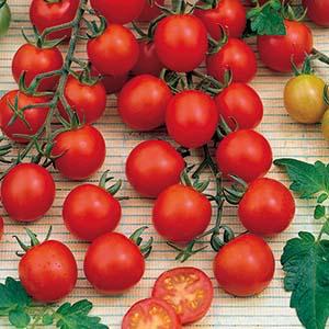 tomat_hög_supersweet_100