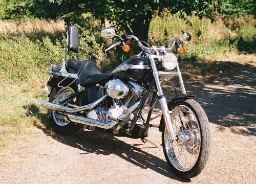 Reclining lazily in the spring sunshine, the Softail waits patiently to scare some more children and small mammals.