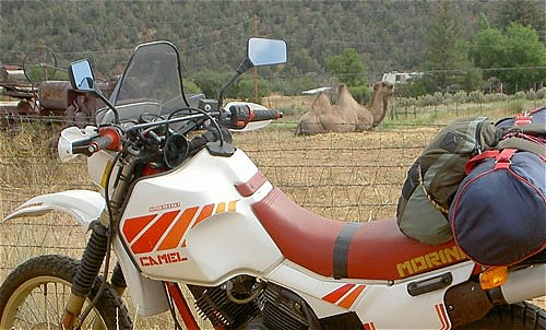 Special prize for any Morini Camel riders who also bring a real camel with them on the day. Probably.