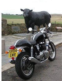 Some people might say this bike is a load of Aberdeen Angus!
