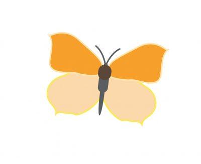 Kitzbuehel Alpenblumen Illus 02