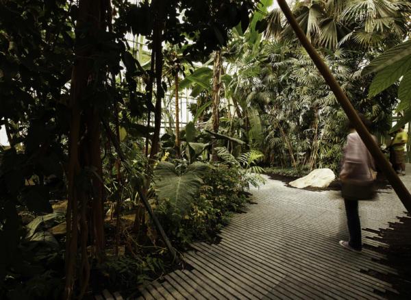 Com Lan Serre Jardin Des Plantes 13 06 2010 0030