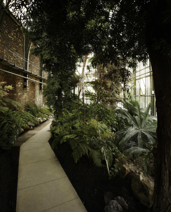 Com Lan Serre Jardin Des Plantes 13 06 2010 0180